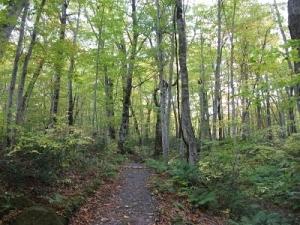 171019ブナ林の道