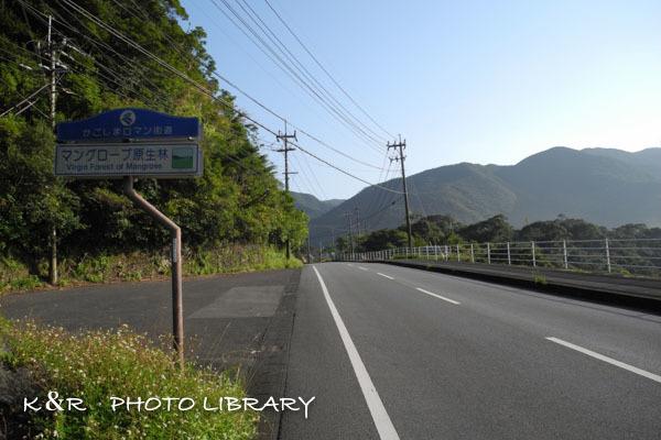2016年11月6日奄美大島・マングローブ原生林1