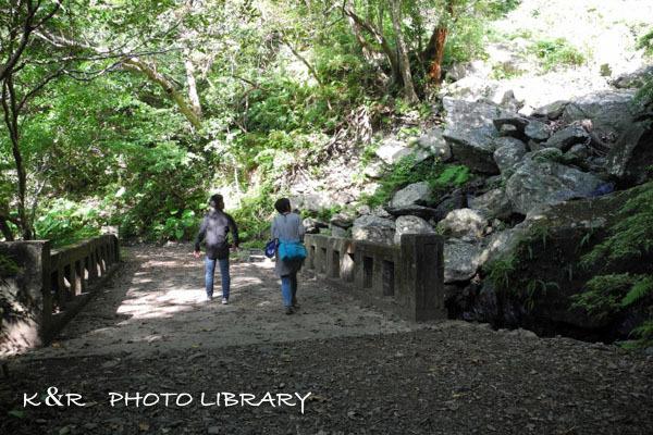 2016年11月6日奄美大島・フナンギョの滝3