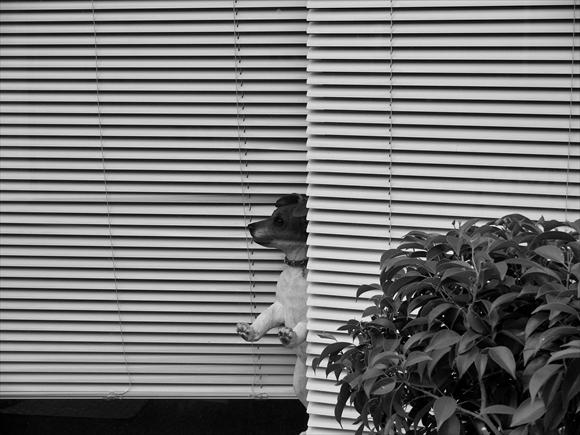 window-2_R.jpg