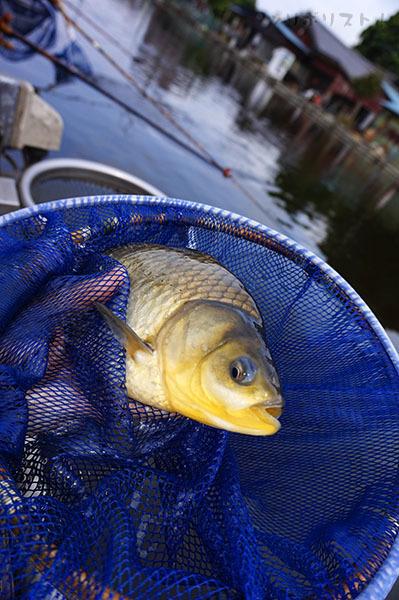 武蔵の池010