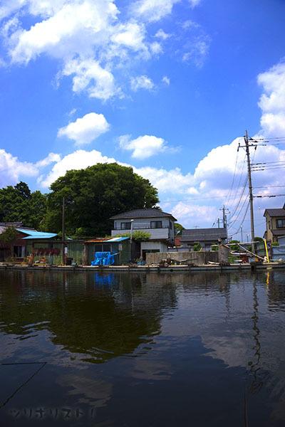 武蔵の池024