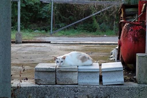 散歩犬猫-a DSC04809