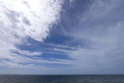 台風20号後-c-11-03 P1140742 (2)
