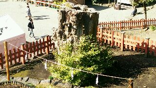 鶴岡八幡宮銀杏