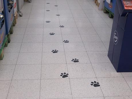 犬の足跡1