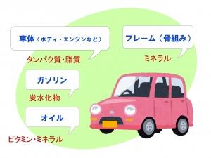 五大栄養素(車)