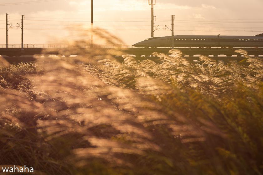 291023kanagasaki-1.jpg