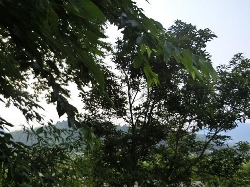 2017-06-18 asasora3