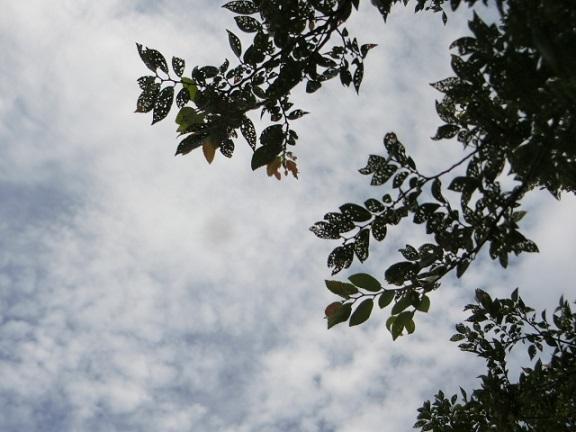 2017--07-18 sky