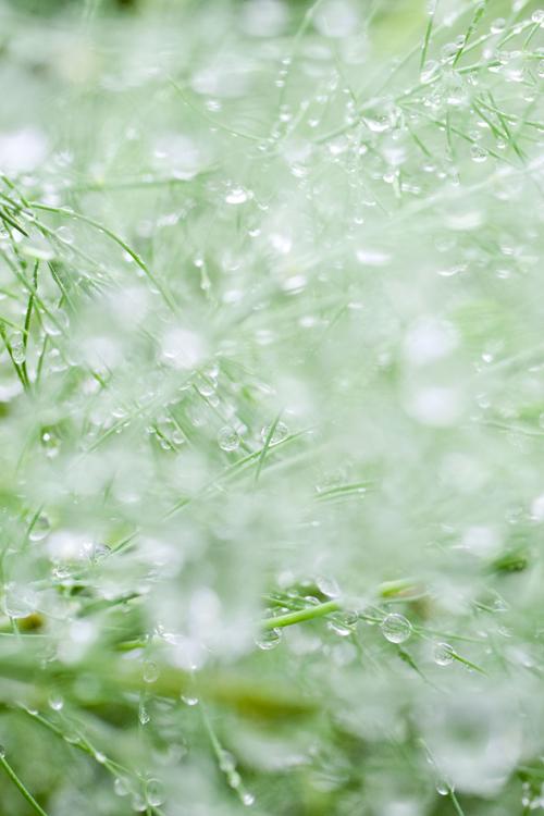asparagus_17_9_28_1.jpg