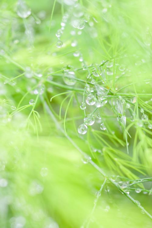 asparagus_17_9_28_2.jpg