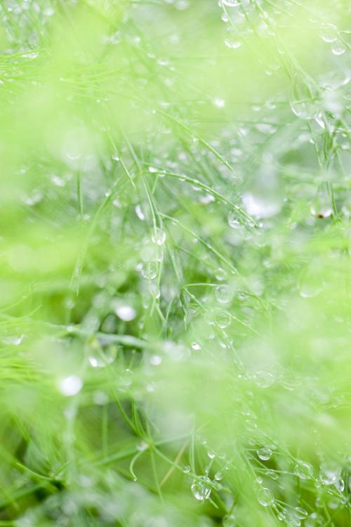 asparagus_17_9_28_7.jpg