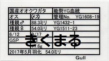 Gullさん1608