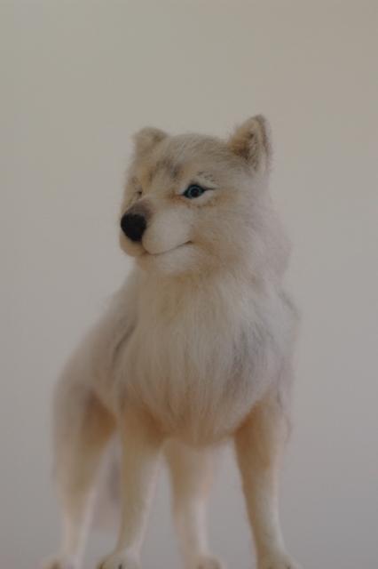 オオカミ展2017ビアンカ