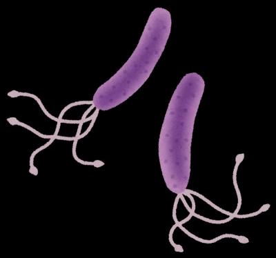 ピロリ菌のイメージ図