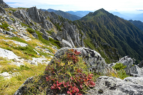 紅葉と三ノ沢岳